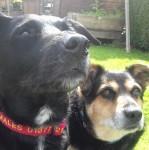 Echo and Koda